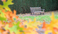 Garden Bench (ChristineGibbs) Tags: canon canon24105mm eos eos6 leicester leicestershire oadby botanicalgarden autumn leicesterbotanicalgarden trees tree leaves colourful