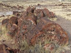 Long Logs Trail (Zruda) Tags: arizona geo:lat=3481175178 geo:lon=10985621343 geotagged headquarters holbrook unitedstates usa