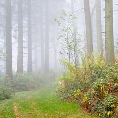 Mist, Pant-du woodland, N/Wales, UK, 2018. (Phlips photos) Tags: 2018 trees fujixt2 fuji35mmlens woods autumn pantdu wales naturesdetail northwales woodland mist
