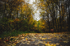 DSCF7180 (olegmescheryakov) Tags: tree boulevard footpath woods autumn forest bush trees green sky clouds sunset light leaves beautiful grass fall summer leaf nature national park natural yellow lush garden road wood gold landscape