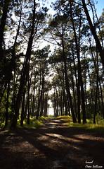Adentra te conmigo y pierdete en el paraíso... (Ismael Owen Sullivan) Tags: forest bosque nikon d5300 foto fotografia naturaleza natural nature portugal españa europe europa travel traveler paraiso paradisiaco paradise green camino senda