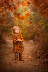 Fall Days ({jessica drossin}) Tags: jessicadrossin fall autumn orange girl toddler baby child kid leaves tree path boots dress yellow mustard pretty seasons childhood