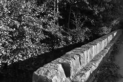 The Wall (rustyruth1959) Tags: valley drop walltop topstones outdoor greeney stones driveway lines shadows greenlane path leaf leaves trees blackwhite mono bw monochrome leadinglines wall saturdayselfchallenge ssc ripponden calderdale yorkshire england uk nikon1855mm nikond5600 nikon sycamore tree