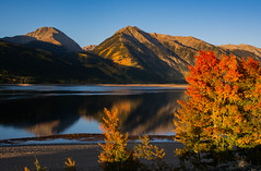 Not a Cloud in the Sky (Nancy King Photography) Tags: trees landscape aspentrees aspens nature mountains goldenleaves sunrise lake fall colorado twinlakes