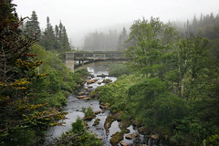 misty Newfoundland (freakingrabbit) Tags: mist stream fog bridge old green water river trees derelict witless bay nefoundland canada
