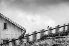 Sweden - Vrangö Island (Marcial Bernabeu) Tags: marcial bernabeu bernabéu europe europa sweden suecia scandinavia escandinavia vrango vrangö island isla monochrome monocromo house casa bird ave pájaro valla fence