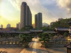 Chi Lin Nunnery, Hong Kong, 志蓮淨苑, 香港