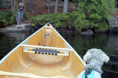 pirate island (bpwilby) Tags: 100speed 35mm ektar film kodak kodakektar100 nikon nikonf4 usa c41 camping kodakektar lowersaranaclake negative newyorkstate printfilm upstatenewyork