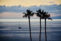 Tenerife blues (mostaphaghaziri) Tags: nikond7200 sea boat beach palm blue after sunset adeje costa tenerife