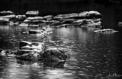 Marble Creek in the Rain (Wits End Photography) Tags: color mirror reflection blackwhite rocks marblecreek creek missouri blackandwhite monochrome objects gray black grey bw reflections water white