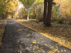 IMG_2815 (August Benjamin) Tags: provo provoriver provorivertrail fall utah mountains provocanyon fallcolors autumn trees leaves orem utahvalley jogging