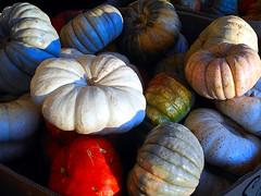 Last Pumpkins of 2018 (EmperorNorton47) Tags: ranchosantamargarita california photo digital autumn fall vegetables pumpkins halloween thanksgiving harvest traderjoes