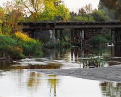 River nooks (fotoswietokrzyskie) Tags: wood water tree grass river landscape mamiyarz67ii kodak ektar100 analog medium format 6x7 evening sekor 350mm bridge old