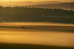 keep going.... (Wöwwesch) Tags: sunrise mist golden walk landscape early pastures men friends together