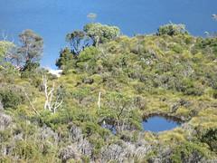IMG_3836 (shearwater41) Tags: australia tasmania cradlemountain dovelake lake tarn
