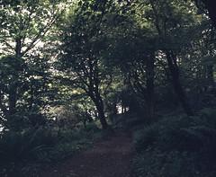 Small Forest (nikolaijan) Tags: mamiya rb67 120 c90mmf38 fuji film treeportrait ireland path forest fern provia400f courtmacsherrey green tree woodland