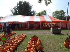 DSC07717 (kurmanstaff) Tags: kurmanphotography halloween dusselfarm kentohhalloween halloween2018 pumpkinsandsquash outdoorfestival