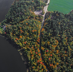 Autumn Road (free3yourmind) Tags: autumn road trees forest colorful belarus lake aerial drone quadcopter xiaomi mi
