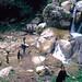 Calabritto (AV), 1979, Pellegrinaggio e festa alla Grotta della Madonna del Fiume.