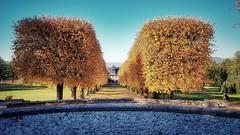 goldene Allee (kboldi) Tags: bergfried saalfeld tree baum sun sonne fall autum herbst leave laub blätter gold natur nature