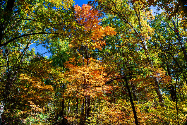 Hoosier National Forest - Mogan Ridge - October 29, 2108