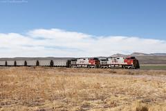 BNSF empty coal from Mexico at Tonuco, NM (Travis Berryman) Tags: elpasosub atsf elpaso westtexas desertrailroading