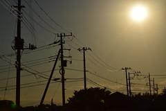 20180928_008_2 (まさちゃん) Tags: 電柱 電線 silhouette 鳥 夕暮れ時 光 夕陽