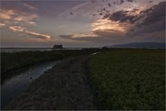 El cel, el mar i l'arròs. (Francesc //*//) Tags: cel mar horitzó arròs deltadelebre deltadelebro sunset capvespre