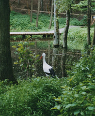 2003 Germany // Umweltpark Güstrow (maerzbecher-Deutschland zu Fuss) Tags: 2003 germany deutschland maerzbecher umweltpark güstrow mecklenburgvorpommern