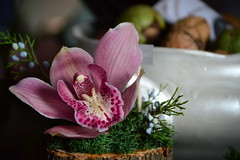 DSC_8143 (emina.knezevic) Tags: nikon nikonphotography nikonphotographer nikond3200 flowers floralarrangement orchid pinkorchid closeup