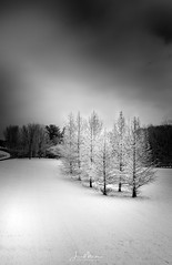 Trees in Snow 2 (Wits End Photography) Tags: landscape winter season nature blackwhite icy outdoor blackandwhite weather frost snow white trees plant color monochrome freeze tree gray grey black witsendphotographygallerybw bw cold places ice chill cool country exterior frozen natural outside picturesque rural scenic view
