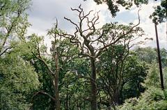 Scotland 2014 C35 19 01.jpg (thalgyur) Tags: leicam7 trossachs scotland 35mm film kodakportra400