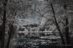 Infrared Scenery (gporada) Tags: infrared water sunny summer nikond40 720nm infraredconvertedcamera landscape contrasty vivid infraredreflections