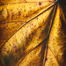 Leaf #001