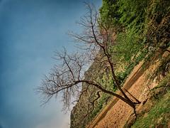 சிறுபறவை… நீயானால் உன் வானம் நானே… (Prabhu B Doss) Tags: prabhubdoss travelphotography streetphotography tree usilampatti madurai tamilnadu gfx50s gf3264mm fujifilm