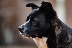 Our Little Fox (matthewken4722) Tags: rocky dog portrait family candid graham