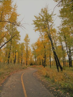 Autumn Bow River Parkway