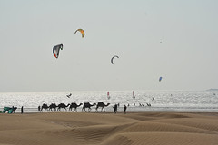 Surf kiting and the camels (paulrich786) Tags: kiteboarding morocco essaouira surf camels