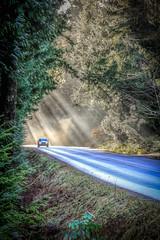 Car in Sunbeams (kellypettit) Tags: sunbeams car forest road