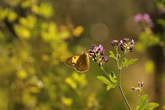 ancora. ottobre (@5imonapol) Tags: butterfly bug october nature lifr anima fall foliage