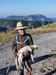 Il a perdu sa mère (François Magne) Tags: berger bergère brebis troupeau estive alpage pastoraloup transhumance scene pastorale fz 300 lumix loup couchade agneau