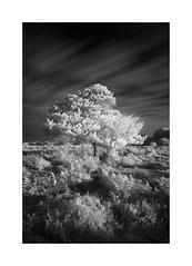 radiance (vuzephotography.co.uk) Tags: infrared ir