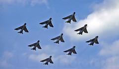 LIGHTNINGS x 9 (TF102A) Tags: aviation aircraft airplane englishelectric lightning raf rafbinbrook