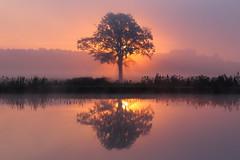 Morgen (geraldtourniaire) Tags: canon natur nature nebel sonnenaufgang landschaft mittelfranken 6d eos6d 24105l franken