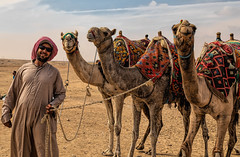 Who has the best smile? (stevebfotos) Tags: pyramids egypt middleeast desert camels cario 6thofoctobercity gizagovernorate eg