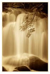 Whatcom Falls Park (EdBob) Tags: waterfall water cascading flow flowing maple tree rocks spray motion longexposure branch nature outdoors landscape bellingham pugetsound pacificnorthwest forest woods spia monochrome monochromatic blackwhite blackandwhite edmundlowephotography edmundlowe america usa autumn fall allmyphotographsare©copyrightedandallrightsreservednoneofthesephotosmaybereproducedandorusedinanyformofpublicationprintortheinternetwithoutmywrittenpermission