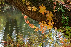 Autumn in the park (Jurek.P) Tags: autumn jesień park citypark leaves colours water liście kępapotocka jurekp sonya77