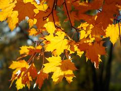 PA140603 (banagher_links) Tags: olympus omd em10 mark iii autumn russia moscow mft micro 43 юпитер8 jupiter8