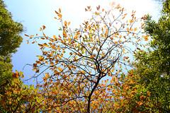 1PRO_1320 (Radu Pavel) Tags: radu radupavel pavel fotononstop cosmos ©radupavelallrightsreserved ©radupavelallerechtevorbehalten ©radupaveltodoslosderechosreservados ©radupavel版権所有 nature natur naturaleza 自然 colours farben colores 色 green grün verde 緑 yellow gelb amarillo 黄 orange anaranjado 橙色 sky himmel cielo 天 tree baum árbol 木 outdoor alairelibre imfreien ルーマニア world welt mundo 世界 light licht luz 光 tranquilo ruhig geruhsam serene peaceful 2018 leaves blätter hojas 葉 autumn herbst otoño 秋
