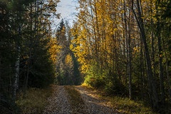 Tie vie (kimmophoto) Tags: road forest wood trees autumn syksy